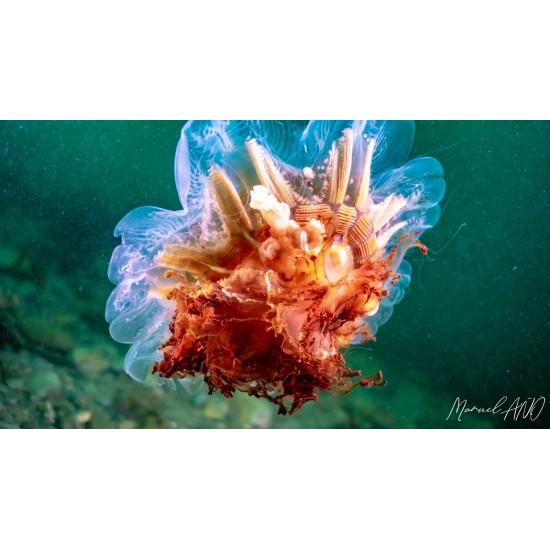 L'antre de la méduse