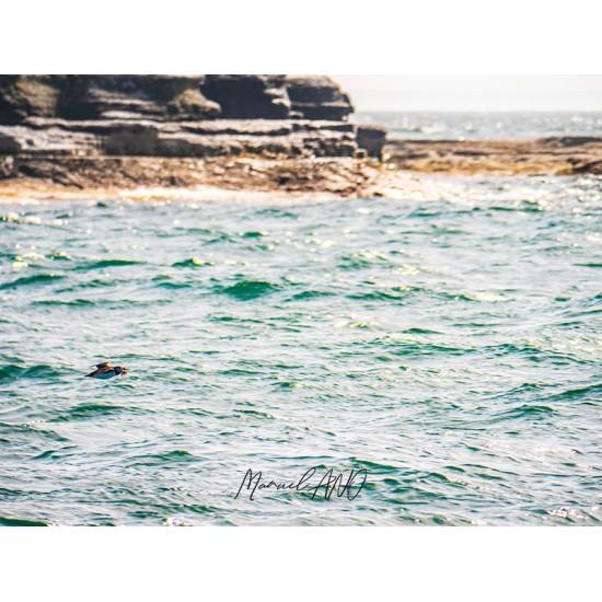 Île à Calculot des Betchouanes
