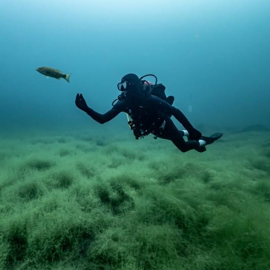Level 2 : Advanced Diver L2...