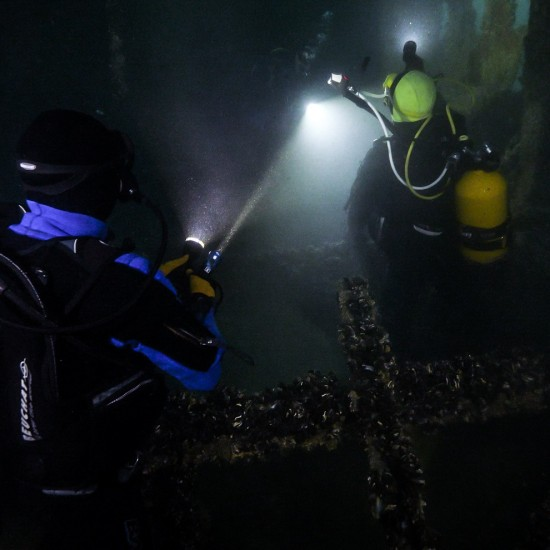 Speciality : Night diver