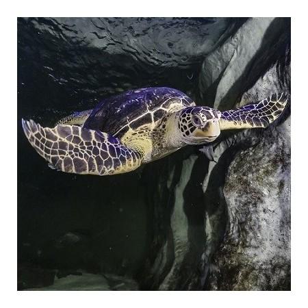 Reptiles marins